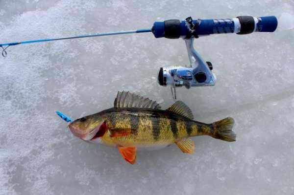 Ловля окуня по первому льду на балансир, блесну или мормышку. Зимняя ловля окуня