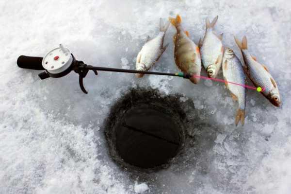 Какая рыба ловится в марте. Ловля карася в марте