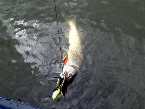 Рыбалка на щуку осенью наиболее уловиста