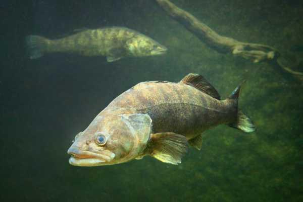 Лучшие воблеры на судака: описание, отзывы рыболовов