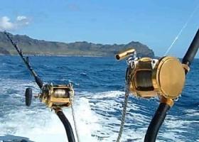 Рыболовные катушки: виды, особенности, лучшие варианты