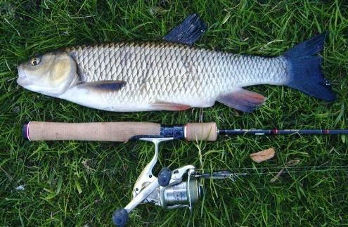 Рыба голавль: описание, способы ловли, снасти