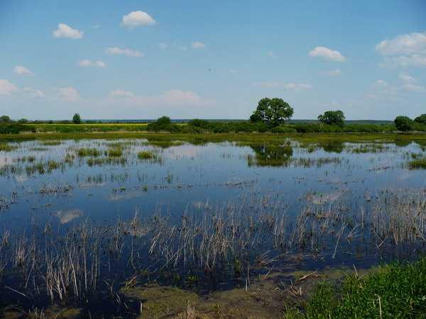 Озеро Долгое в Челябинской области – архелогический памятник природы