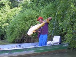 Секреты рыбалки: наживки для сома