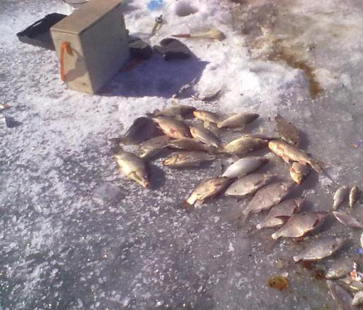 Веселовское водохранилище (Ростовская область). Зимняя рыбалка на Веселовском водохранилище
