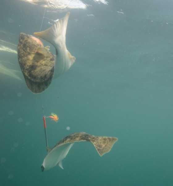 Рыбалка в Магадане: описание рыбных мест, отзывы
