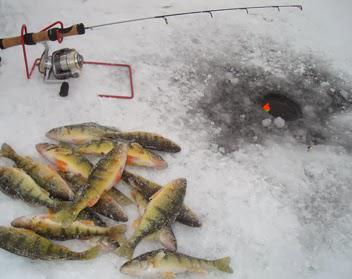 Ловля окуня в феврале. Снасти и прикормка для ловли окуня зимой