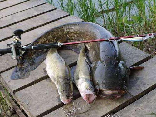 Охота и рыбалка в Череповце: особенности, описание и интересные факты