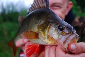 Рыбалка в ноябре. Отзывы о рыбалке на Волге, Дону и Кубани