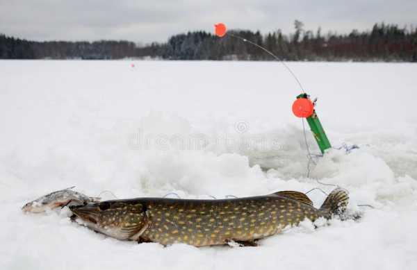 Ловля на жерлицы зимой: техника, оснастка и секреты подледного лова